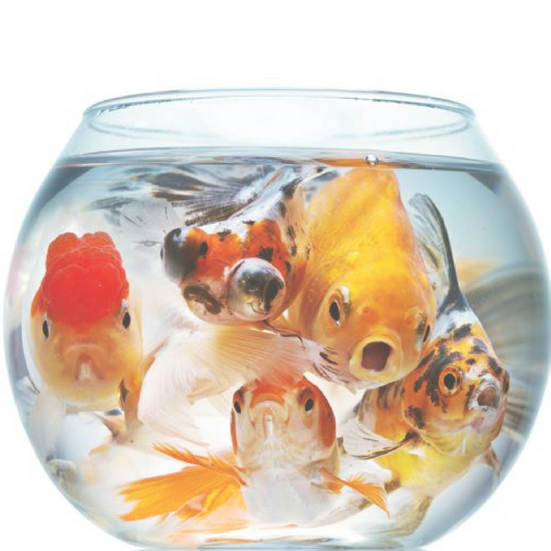 7 Things I've Learned From The WeWork Fishbowl
